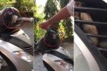 Clip: Rắn 'cố thủ' trong đầu xe máy SH khiến dân mạng khiếp đảm
