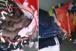 Clip: Hậu nghỉ Tết, sinh viên tá hỏa phát hiện chuột làm ổ, đẻ con trong tủ quần áo