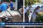 Xôn xao thông tin cá mập xuất hiện ở vịnh Hạ Long: Chuyên gia nói gì?