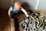 Rùng mình clip bé trai chơi đùa với ổ rắn lúc nhúc, người lớn chỉ đứng nhìn