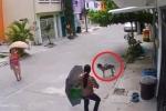 Clip: Chú chó bất lực nhìn 2 nữ quái trộm bát thức ăn của mình