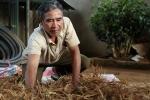 Video: Đam mê trồng cây dược liệu, người đàn ông suýt mất vợ