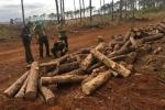 Bắt chủ tịch xã nhận hối lộ, tiếp tay phá rừng ở Đắk Nông