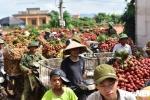 Ảnh: Chôn chân dưới trời nắng tại thủ phủ vải thiều Bắc Giang