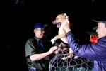 Ảnh: Theo chân đội bắt chó thả rông ở Hà Nội từ mờ sáng