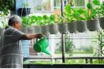 Muôn kiểu trồng rau trong nhà 'không đụng hàng' của dân thành phố