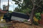 Cây xanh bật gốc, đè gãy trụ điện và sập nhà dân trong mưa dông ở TP.HCM