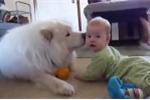 Những chú chó tình cảm đốn tim dân mạng