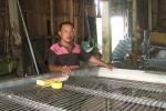 Hệ thống sơ chế và phân loại chanh xuất khẩu của nông dân Long An