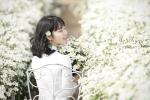 3 điểm ngắm và chụp ảnh cúc họa mi đẹp nhất tại Hà Nội