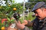 Video: Gặp tác giả trồng quất bonsai trong chậu chó đốm gây 'sốt' Tết Mậu Tuất 2018