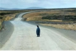 Cực thông minh, chim cánh cụt bắt xe xin đi ké về nhà khi bị lạc