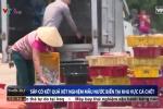 Ngư dân Hà Tĩnh ra khơi trở lại sau vụ cá chết hàng loạt