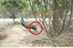 Video: Du khách Trung Quốc giật lông công vườn thú gây bức xúc