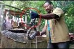 Clip: Loài rắn lạ bí ẩn ở ngôi làng Ấn Độ khiến giới chuyên gia bối rối