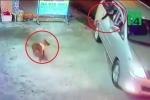 Clip: Đi ô tô, mang súng điện trộm chó trong 10 giây ngay trước cửa nhà