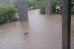 Thời tiết ngày 26/11: Gió mạnh trên biển, miền Trung mưa rất to