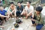 Xem xét trách nhiệm vụ phá rừng quy mô lớn ở Quảng Bình