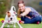 Nuôi chó giúp người độc thân sống thọ hơn