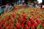 Thanh long Việt Nam bán tại Úc hơn 200.000 đồng/kg