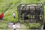 Sở thú Trung Quốc mua voi bất hợp pháp từ Lào