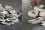 9 người ngộ độc do ăn nấm mọc sau nhà: Bộ Y tế cảnh báo loạt nguy cơ của nấm lạ, nấm hoang dại