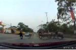 Tránh ôtô, xe máy tông thẳng vào đàn trâu trên đường