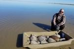 Quá lạnh, hàng trăm con rùa biển bị sốc nhiệt, trôi nổi trên mặt nước ở Texas