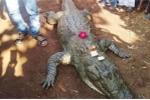 Cả làng bỏ ăn, khóc thương cá sấu 130 tuổi chết già