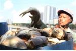 Hà Nội công bố nguyên nhân cá chết