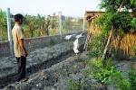 Hàng xóm quán 'Xin chào' dựng chòi nuôi ngỗng cũng bị xử lý hình sự