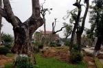 Hàng trăm cây cổ thụ bị di dời khỏi mảnh đất 'vàng' ở Thái Bình