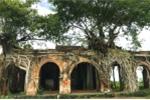 Kỳ bí ngôi đình cổ trong lòng cây bồ đề độc nhất vô nhị ở Việt Nam