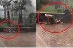 Clip: Kinh hoàng gió thổi bay 2 bố con trong bão MANGKHUT