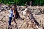 Nữ cán bộ huyện tham gia chặt phá rừng