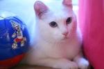 'Tiên tri mèo' của Nga phán gì về World Cup 2018?