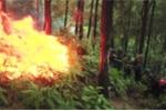 Cháy rừng ở Hà Tĩnh, gần 20ha thông bị thiêu rụi