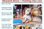 Người phụ nữ Mỹ hứa thưởng 50 triệu đồng cho người tìm được con chó mất tích ở Quảng Bình