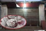 Chó Pitbull 30kg điên cuồng lao vào cắn chủ nhà và hàng xóm: Lời kể hãi hùng của nhân chứng