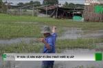 TP.HCM: Cống thoát nước bị lấp, dân uất ức nhìn biển nước nhấn chìm cả xóm trồng rau