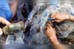 Dân Khánh Hòa bắt hàng tấn tôm hùm, cá bớp sổ lồng sau bão