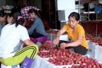 Bảo quản kém, vải Việt chỉ xuất được đi Trung Quốc