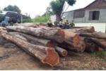 Bắt trùm gỗ lậu Phượng 'râu' tại Đắk Lắk: Cục Kiểm lâm tiết lộ không ngờ