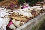 Rúng động doanh nghiệp vứt hàng trăm xác heo thối ra sông Sài Gòn