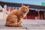 Mèo tiên tri qua đời sau khi đoán đúng kết quả 6 trận World Cup 2018