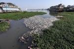 'Lá phổi của Hà Nội' - Hồ Tây đang ô nhiễm nghiêm trọng