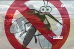 Muỗi 'không có cửa' đốt người ở quốc gia này để lây sốt xuất huyết