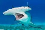 Đấm chết cá mập búa rồi kéo lên bờ chụp ảnh 'tự sướng'
