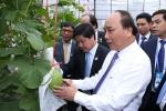 Thủ tướng thăm Khu học xá Trung ương và mô hình nông nghiệp công nghệ cao Trung Quốc