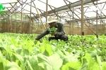 Nhà nông chế tạo chế phẩm thuốc trừ sâu từ rau, củ, quả